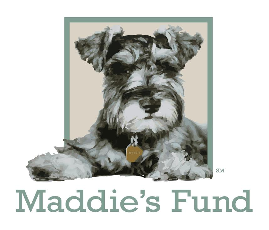 maddie new logo